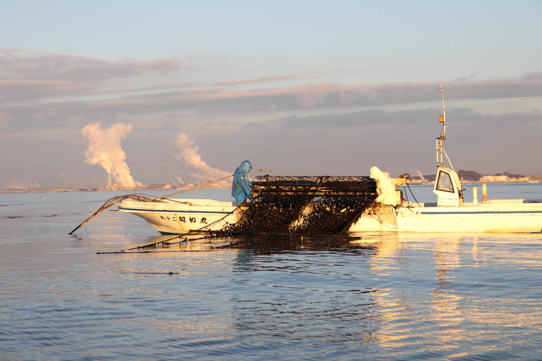 知りたい!海苔養殖のすべて