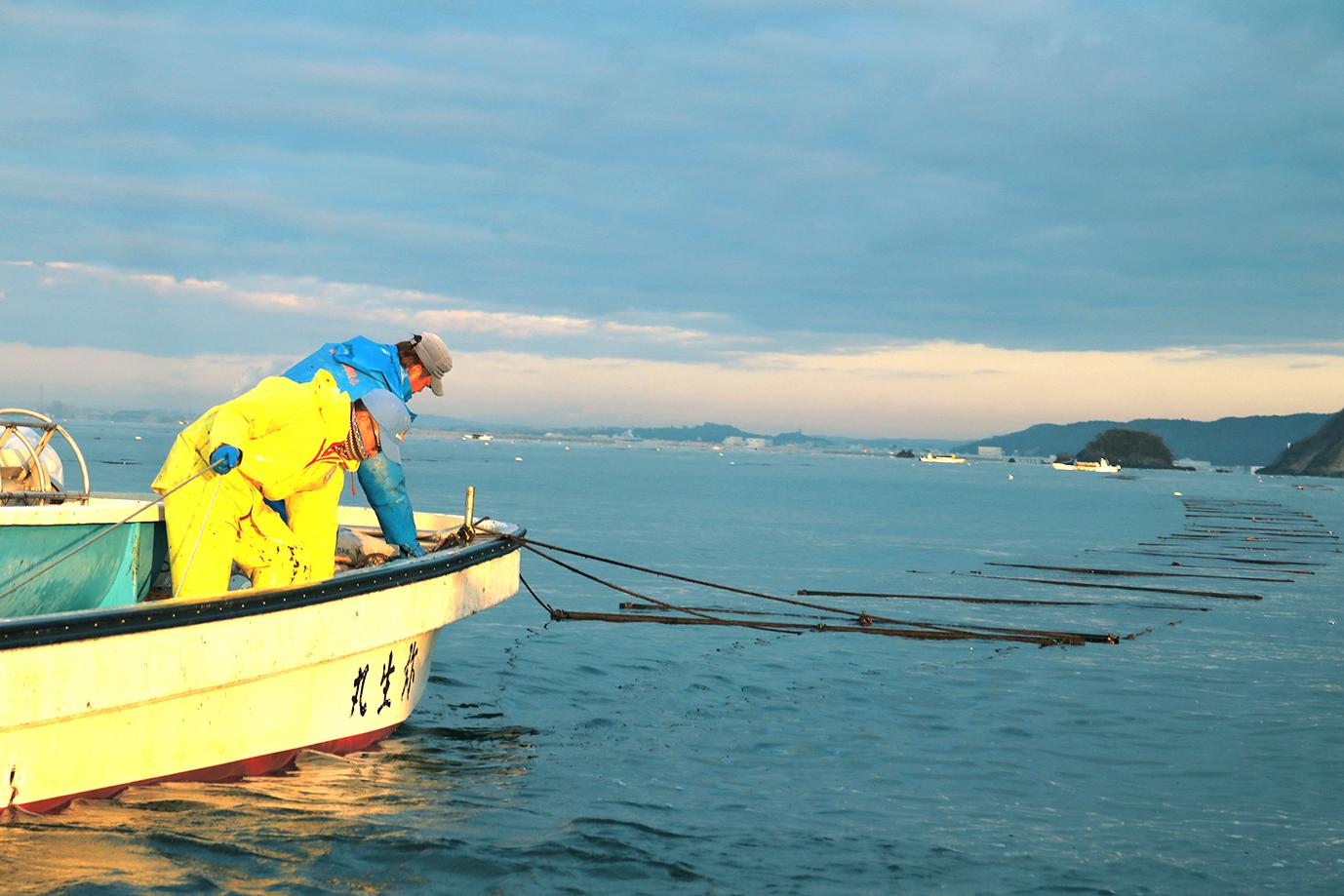 【石巻湾/海苔養殖】飽くなき探究心で次世代をつくる