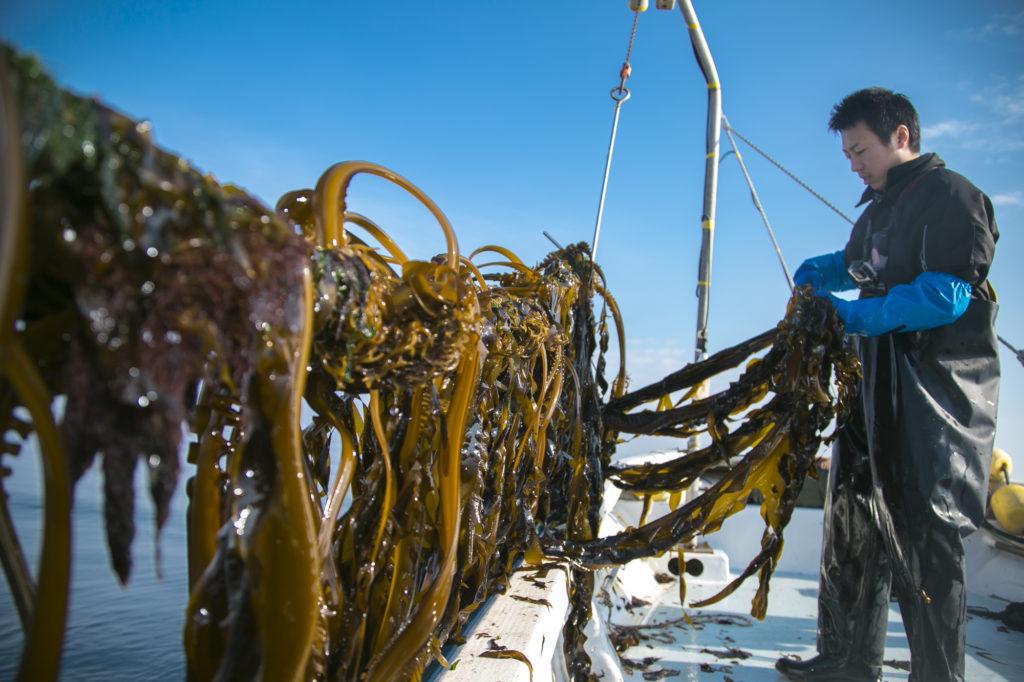 第11回 漁師の仕事を知る、1泊2日の漁師学校「TRITON SCHOOL – ワカメ養殖編 – 」