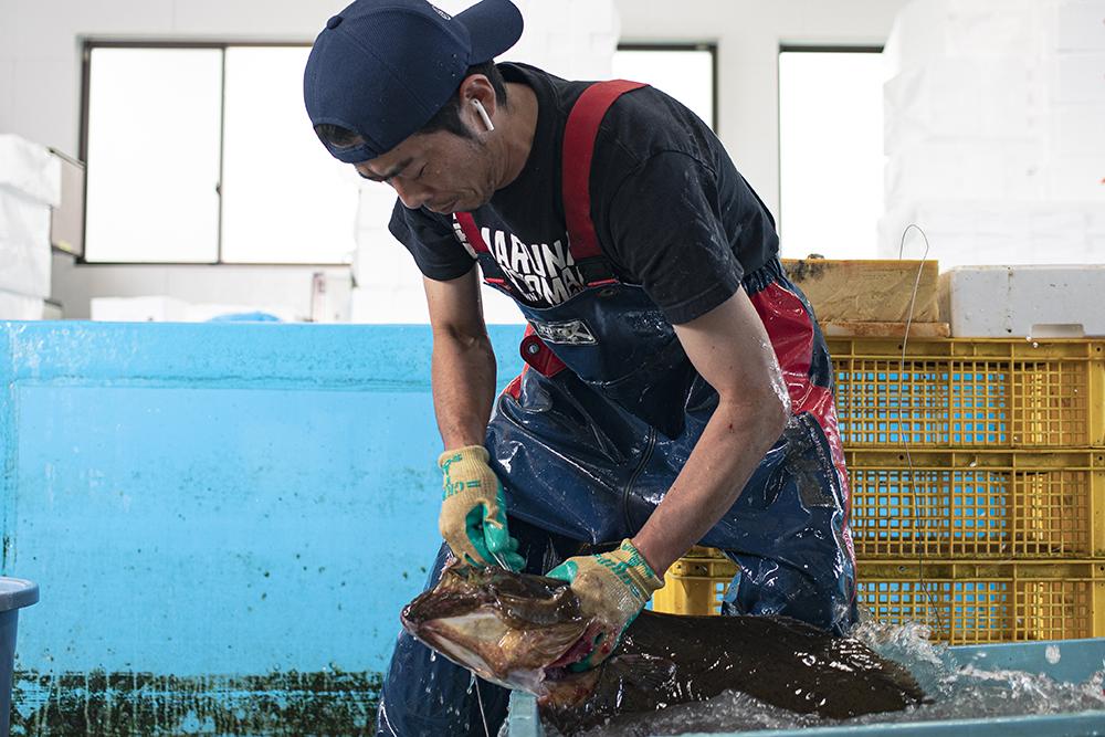 【宮城/魚屋求人/水産】魚一匹一匹の声を聞く、革新的な魚屋 – 株式会社ダイスイ