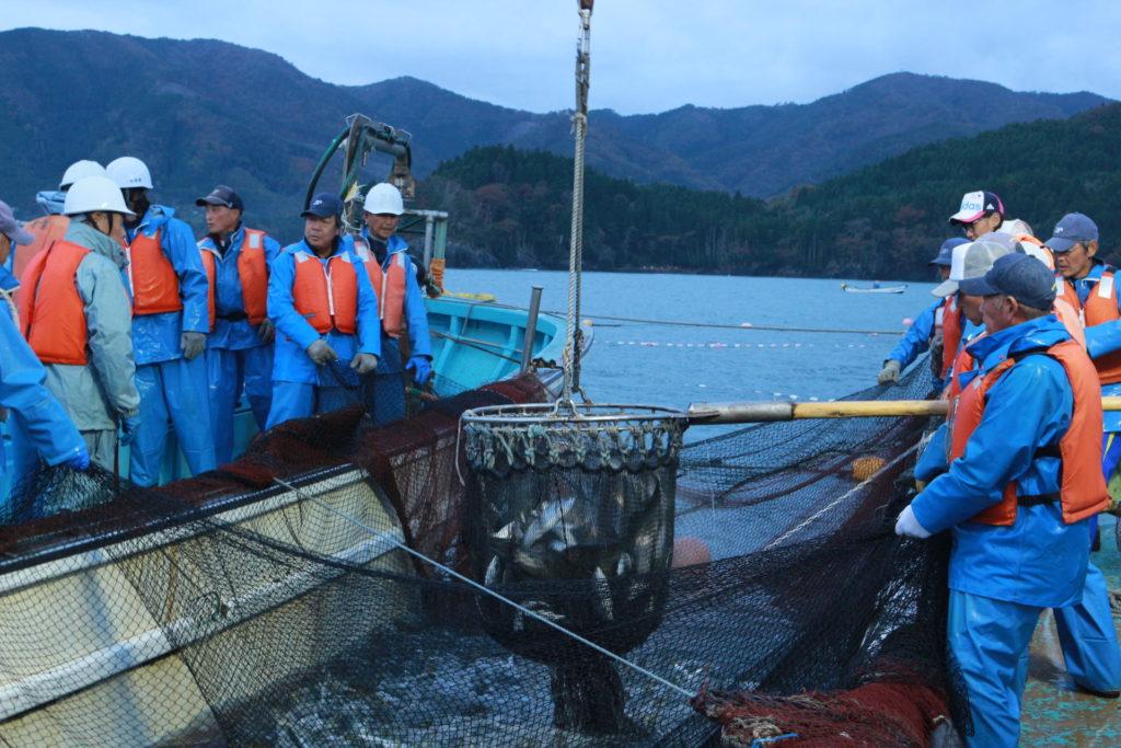 【宮城/漁師求人/漁船】チームワーク抜群!気のいい仲間とともに、イワシやサケなどの定置網漁に挑戦しませんか?